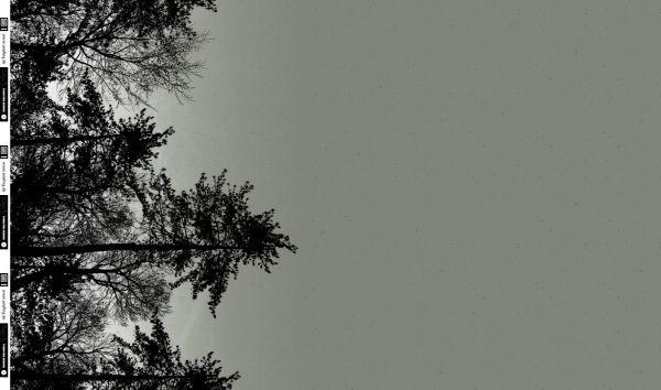 Wyld Forest Bäume olivgrün Sommersweat Panel 1m